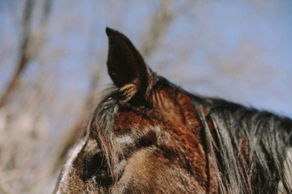 Horse, up close. Photo by Sarah Tacoma.