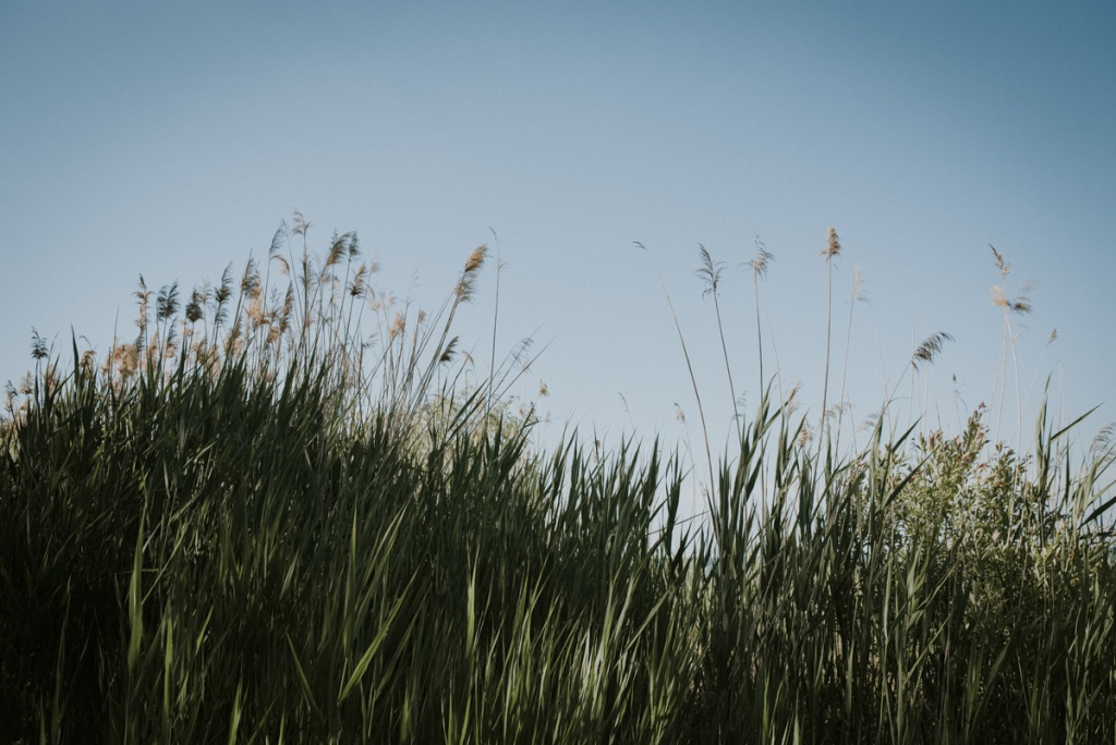 Tall Grasses in Thornbury. Family Photography by Sarah Tacoma.